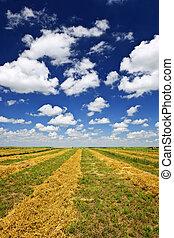 fazenda trigo, campo, em, colheita