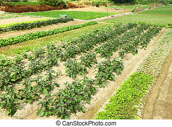 fazenda, vegetal