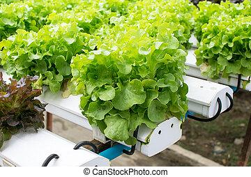 fazenda, vegetal, cultivo, verde, hydroponics