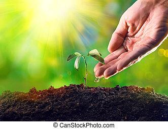 fazendeiro, mão, aguando, um, jovem, plant., planta jovem, crescendo, em, a, manhã, luz