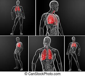 fazendo, ilustração, pulmão, 3d