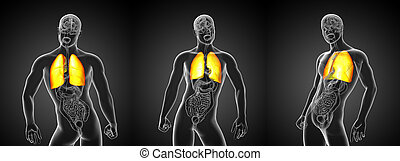 fazendo, pulmão, ilustração, 3d