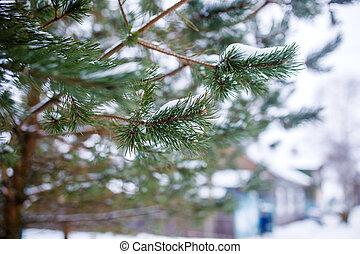 fešný, fotografie, větvit, zima, les