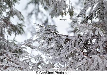 fešný, les, větvit, zima, mrazivý