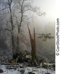 fe, tale;, snow;, mist;, träd