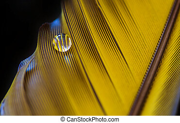 feather and drop of water close-up