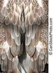 Feather background - Brown feathers closeup