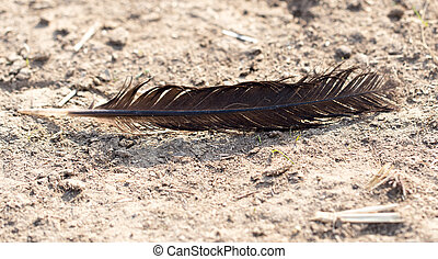 feather bird on the ground