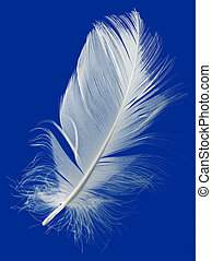 Feather Cut Out - Goose Feather Isolated on Blue Background