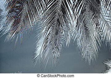 Feather fronds
