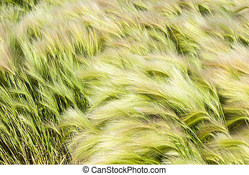 feather grass, mat grass. feather grew up in the Kazakh steppe. texture