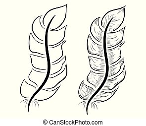 feather illustration, drawing, engraving, ink line art