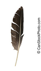 Feather isolated - Bird feather isolated on white background