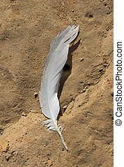 feather of a bird lying on the ground