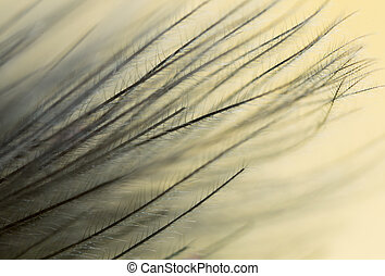 feather on a yellow background. close