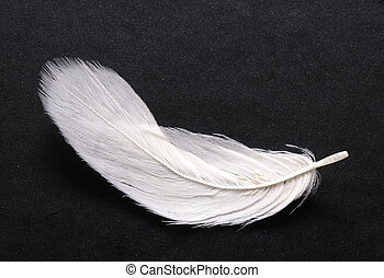 feather on black - white feather over black background