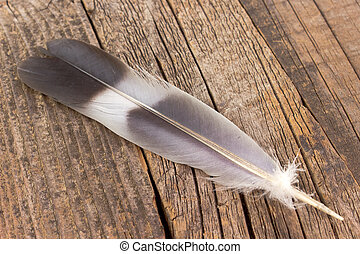 Feather on old wooden background
