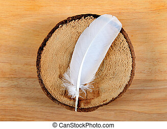 Feather on the Wooden Background