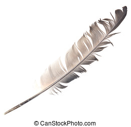 feather on white
