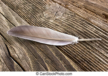 Feather on wooden background