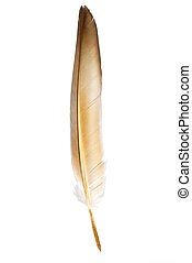 Feather pen. Isolated on a white background