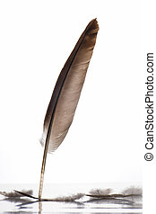 Feather,