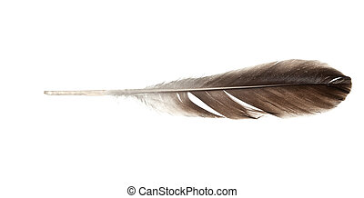 feather quill isolated on white background