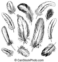 Feather set. Hand drawn vector illustration.