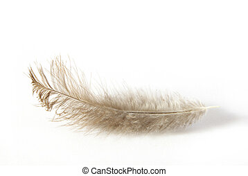 feather - white feather isolated on white background