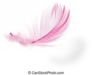 Feather - Pink Feather in soft-focus view. Close-Up. With...