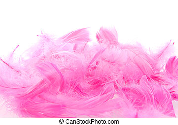 feather - a lot of pink feathers on a white background