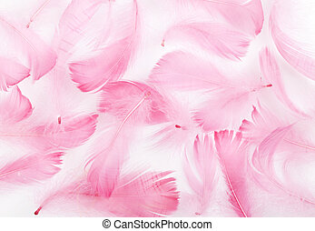 feather  - delicate pink feathers on a white background
