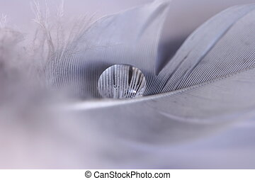 Feather Tear - A droplet of water on white feather