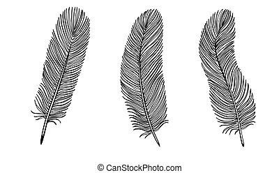 feather., vit, sätta, svart