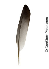 Feather with clipping path