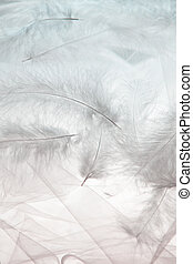 feathers and tulle - airily white feathers and tulle...