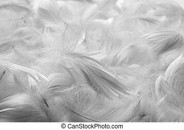 Feathers bw background - Feathers background. Black and...