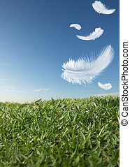 feathers falling - white feathers falling down on green...