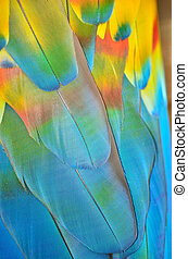 Feathers of a macaw