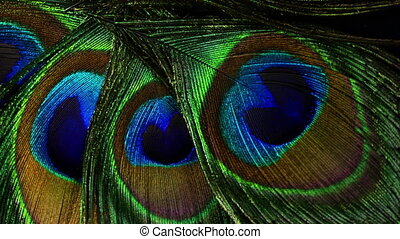 Feathers of tropical peacock bird. Macro rotation close-up view. Beautiful animals. color accuracy of nature