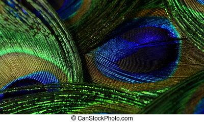 Feathers of tropical peacock bird. Macro rotation close-up ...