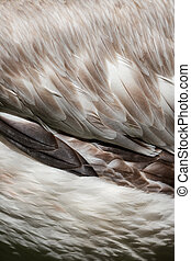 Feathers on bird wing as abstract background