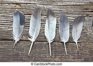 Feathers on old wooden background