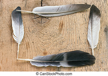 Feathers on wooden background
