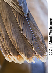 feathers owl