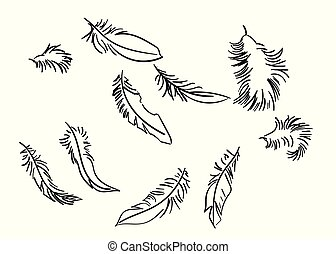 feathers sketch set vector isolated doodle line