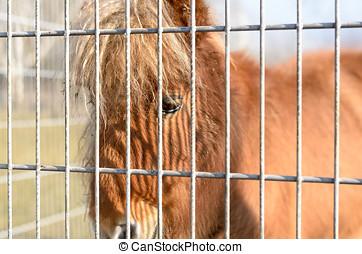 fechten, pferd, pony, hinten