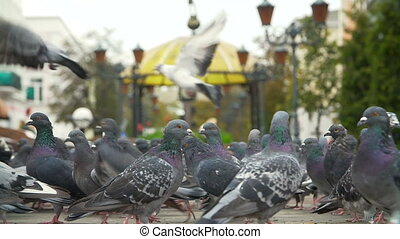 Flock of fed pigeons at the city square