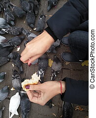 fed pigeons on the street a lot