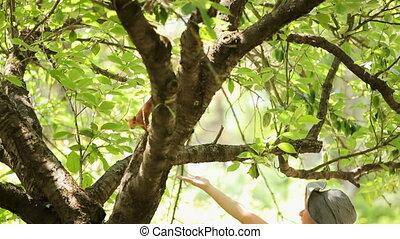 Feed a small squirrel